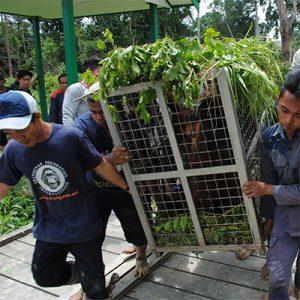 Orangutan Foundation International Release Rimba Raya Biodiversity Reserve