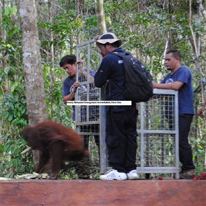 Orangutan Foundation International Release Rimba Raya Biodiversity Reserve