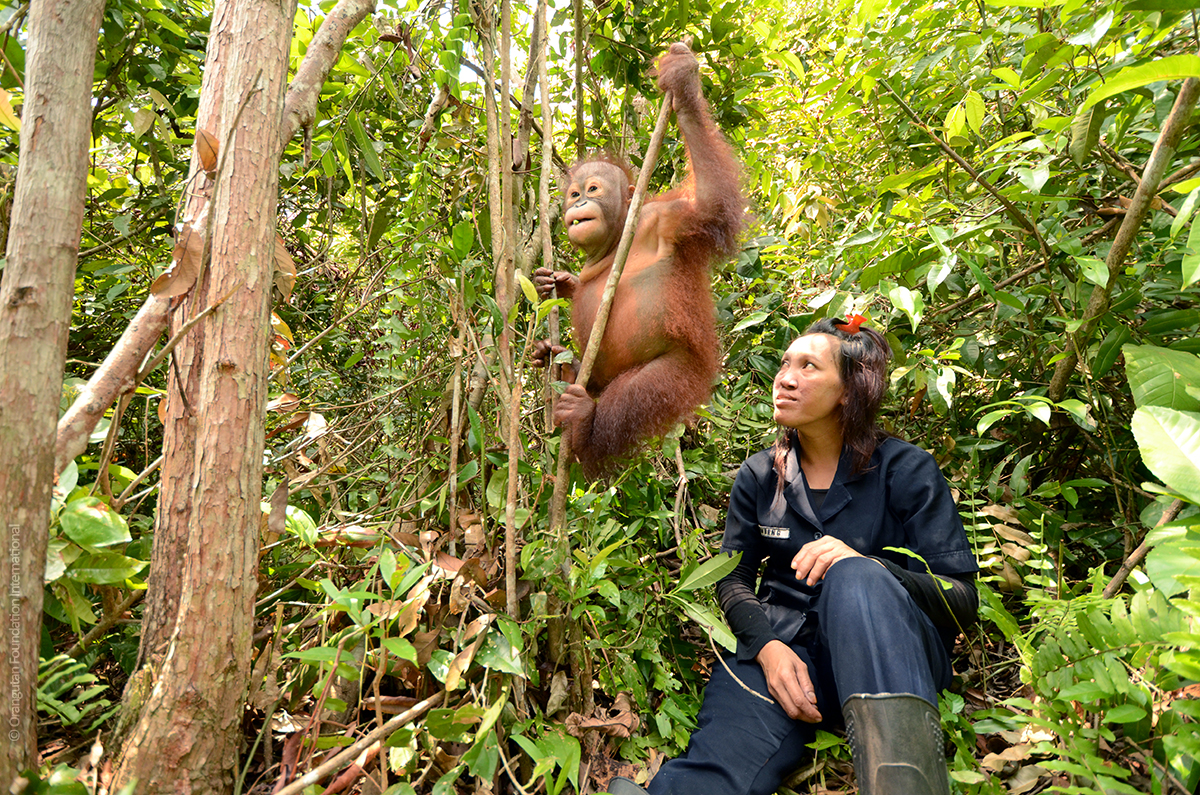 Orangutan Forest School Orangutan Foundation International