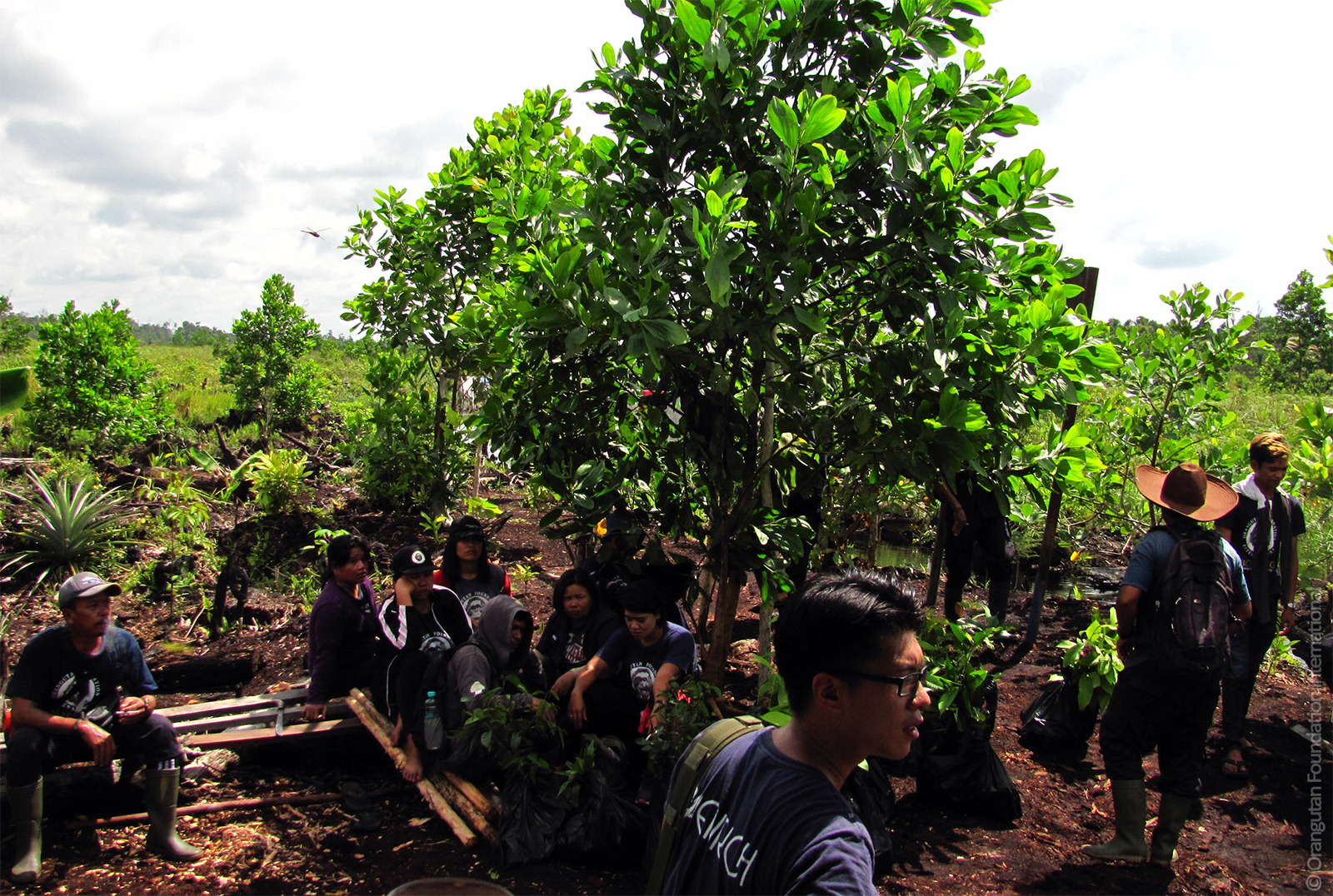 Reforestation Program donate Orangutan Foundation International Borneo Indonesia 2015 Fires