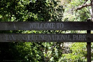 Tanjung Puting National Park Orangutan Foundation International
