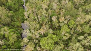 Tanjung Puting and the Sekonyer River Orangutan Legacy Forest Guardians of the Forest Orangutan Foundation International Fall Emergency Appeal Land Purchase
