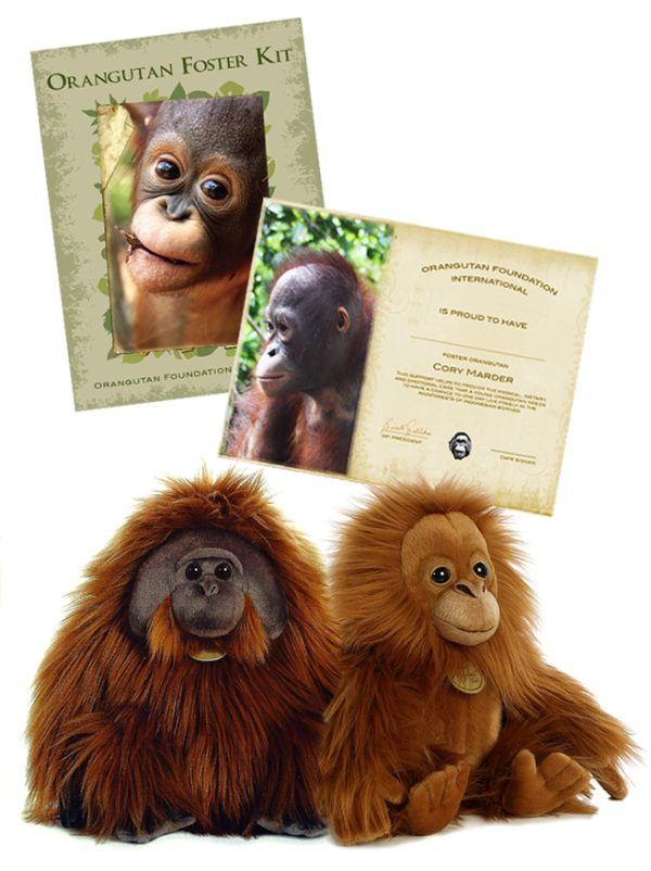 Foster Orangutan Miyoni Plush Bundle Tot Cheekpadder Orangutan Foundation International