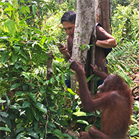 Funny Caregiver Story Orangutan Foundation International