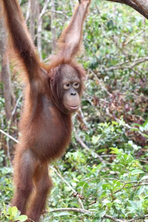 "orangutan Sparky OFI Remembers Mark Hopkins ""Sparky"" Schell"