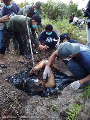 Orangutan Foundation International Baen