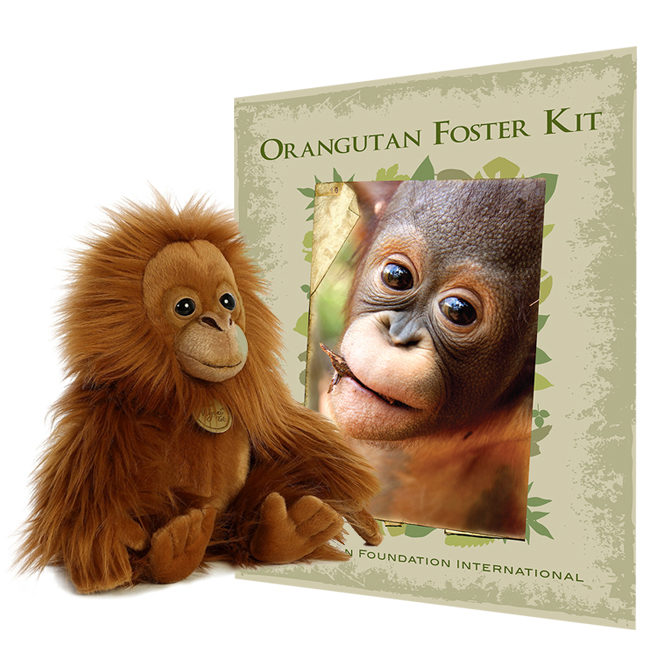 Adopt an Orangutan this Christmas Orangutan Foundation International