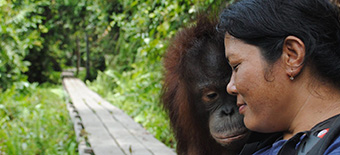 about the Orangutan Foundation International