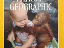 orangutan and Binti in bucket