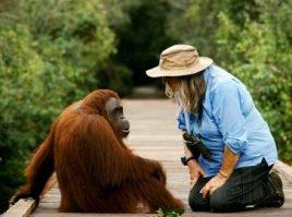 Birute and orangutan at camp leakey