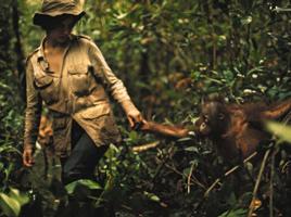 Biruté with orangutan 1970s