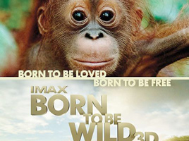 Born to be wild 3d featuring OFI