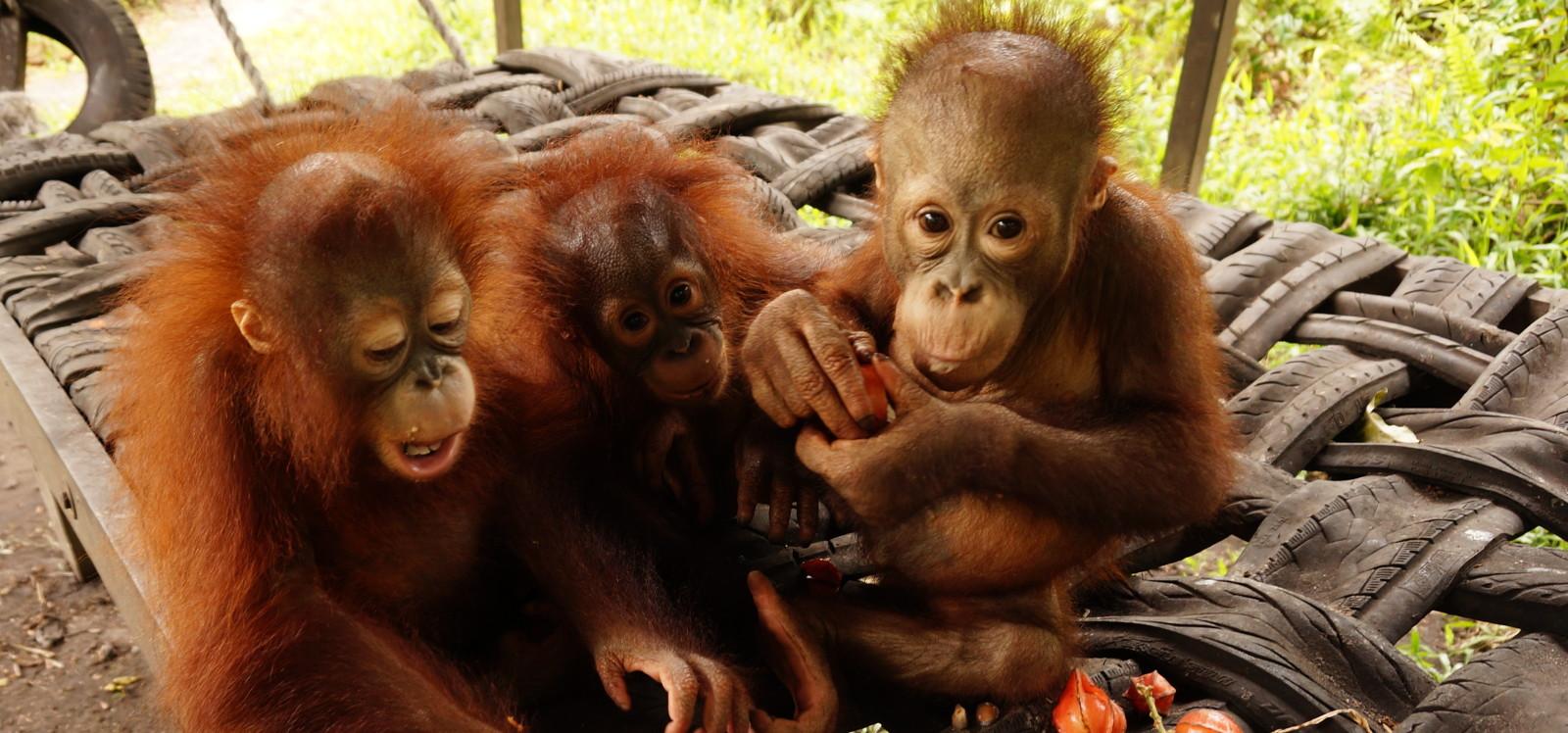 <span>Help Feed<br>Orangutans</span>