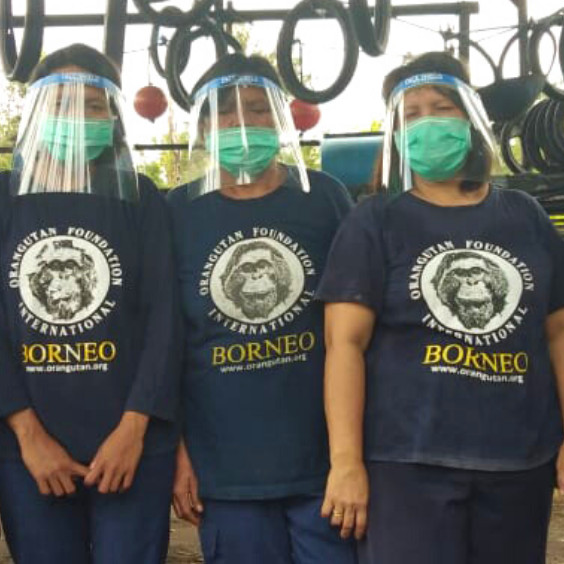 A $1000 Gift can sponsor the monthly salary of three orangutan caregivers