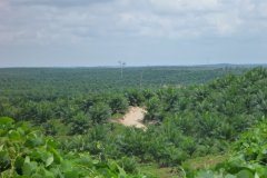 Palm Oil Plantations in the Lamandau Regency