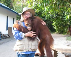 Dr. Biruté Mary Galdikas brings in last orangutan released at Lamandau from OCCQ