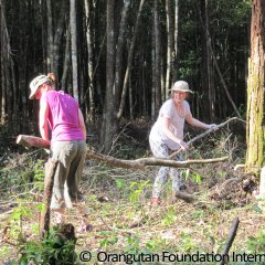 Wenka and Leva moving wood and brush from what will become the center of the island.