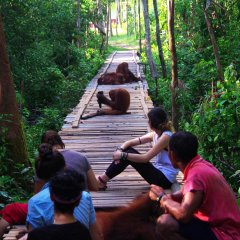 The volunteers take a break, but Lydia the orangutan keeps on working!